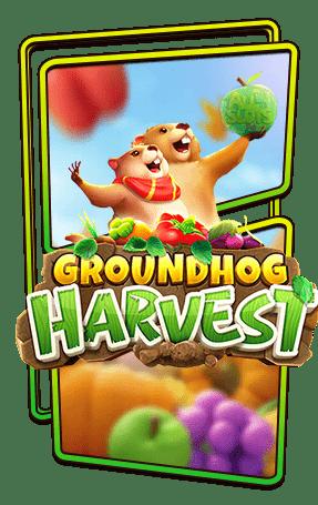 Groundhog Harvest logo